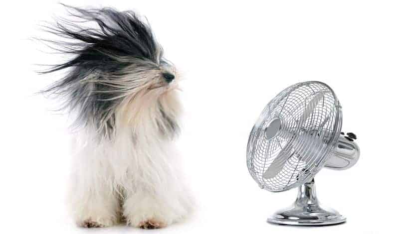best fans that cool like air conditioner